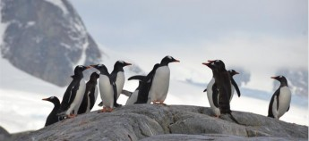 在地球的最南端,与企鹅相遇。