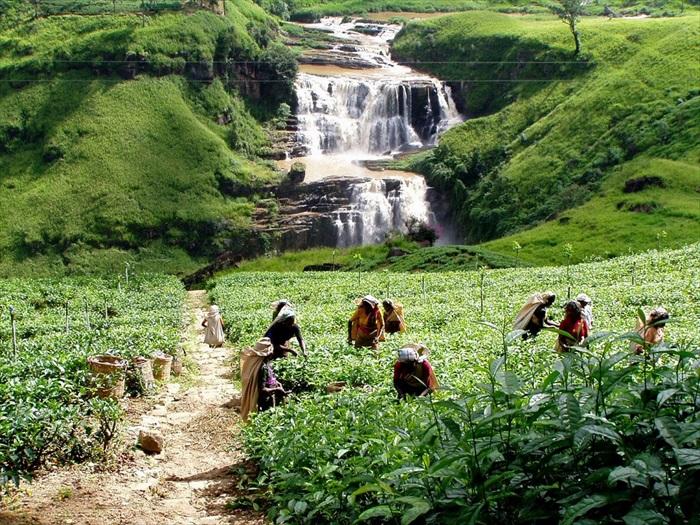 翠绿的茶园和山川流水,勾勒出宜人景致。