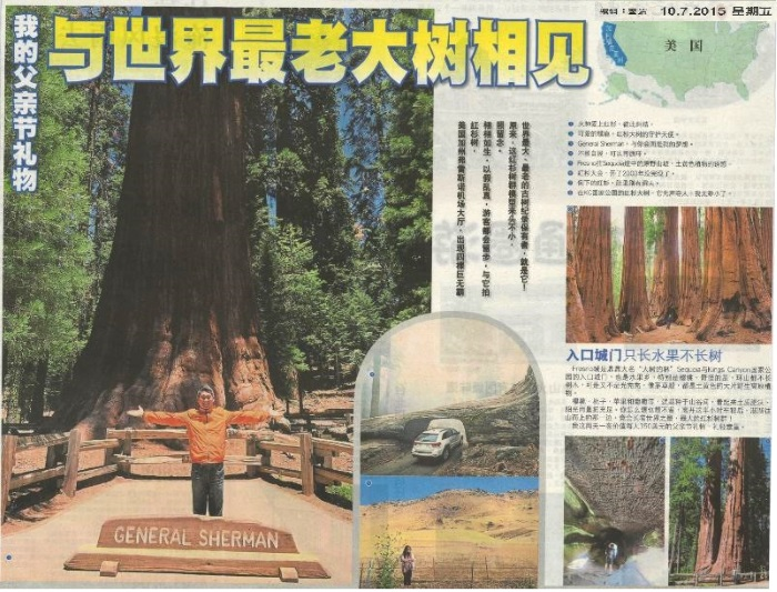 oldest tree jpeg