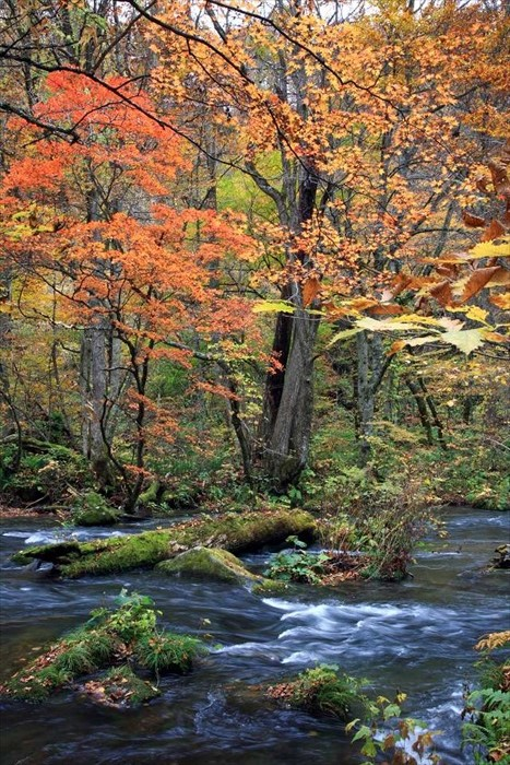 The gurguling stream creates soothing music as your eyes rest against the calm surrounding forest
