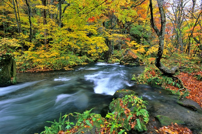 Such a view can only be found on the Aomori mount where Oirase stream flow through!