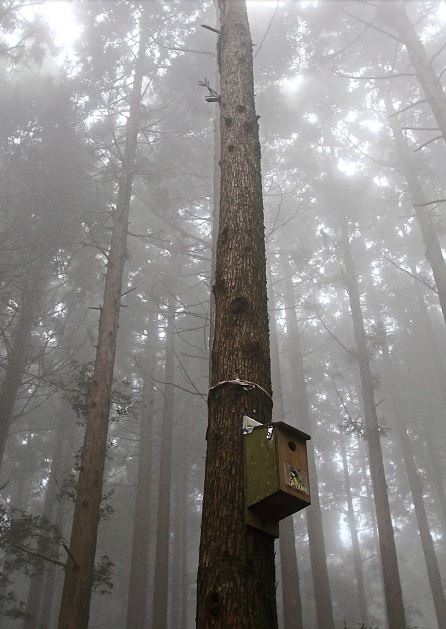 The mist lends a touch of eeriness in this forest.