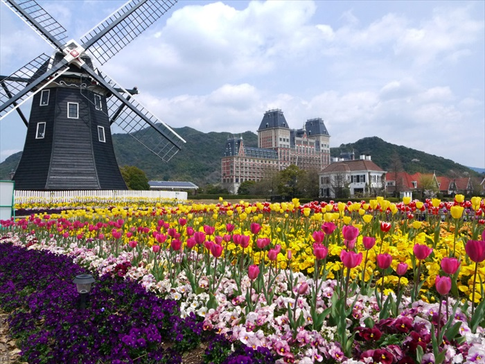 Beautiful Huis Ten Bosch with a Dutch windmill, different season has different flavours, the iconic Tulips blooms last spring!
