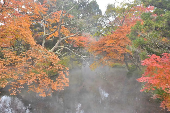 It's magical when the steam mixes with a burst of red leaves!