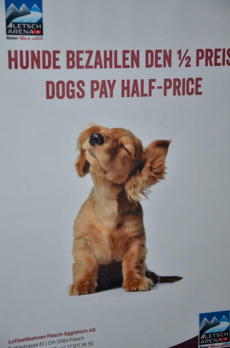 瑞士人很喜欢狗,到处都看到在溜狗或带狗出门的瑞士人,所以狗的地位是很重要的,包括狗坐缆车或火车是要收半价车费!