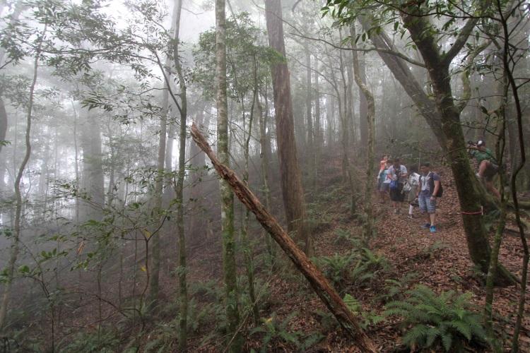 野马瞰山森林步道,犹如身在仙境一般。