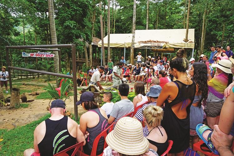 排排坐准备观赏动物表演。
