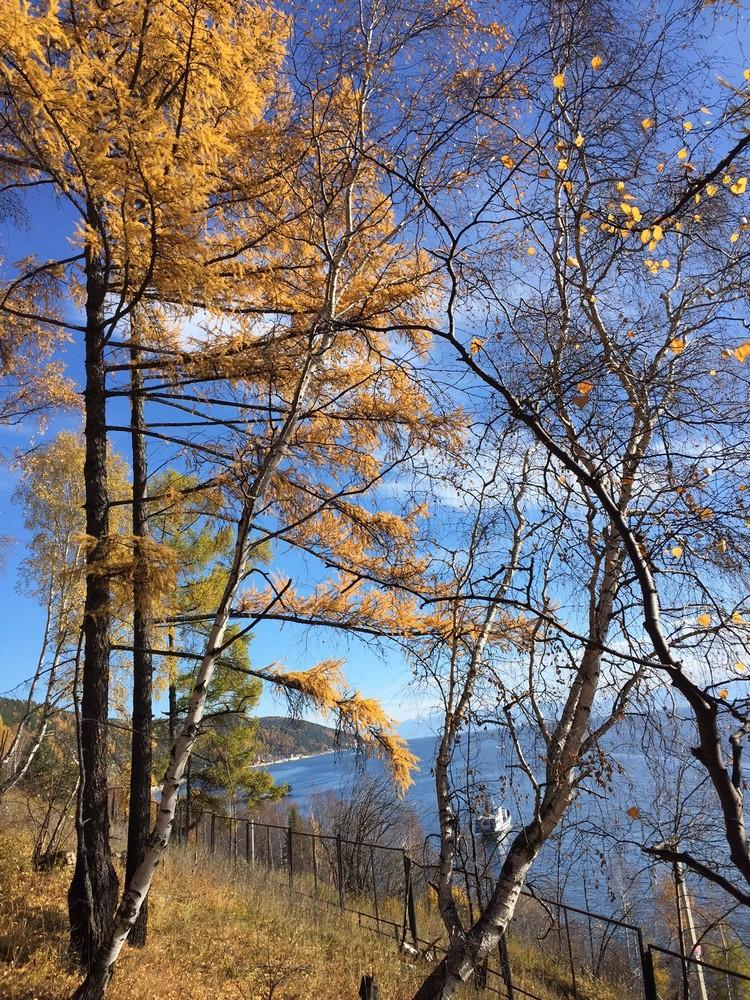 贝尓加湖的深蓝色湖色,有深秋黄叶的树林陪伴。
