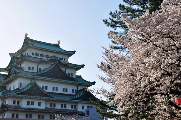 樱花流传各地,但到了日本,当地人对它的偏爱,让它得到相对独立的樱花变种上的全面发展,并广泛种植。