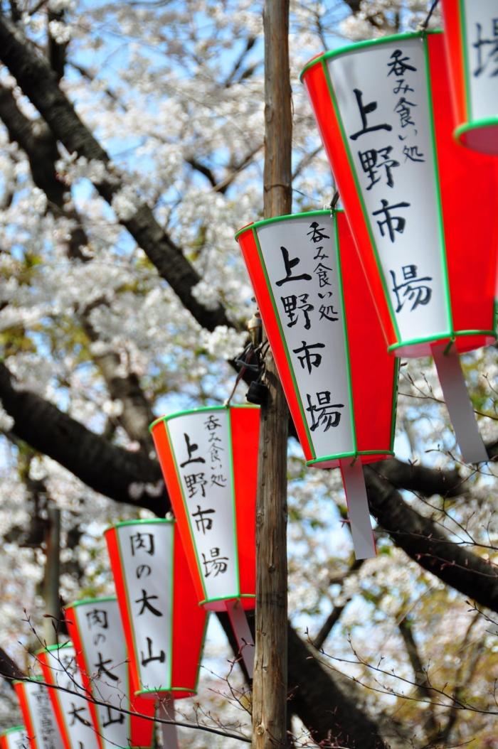 在日本,樱花备受敬仰。樱花虽不是日本国花,但樱花的精神是超越的。