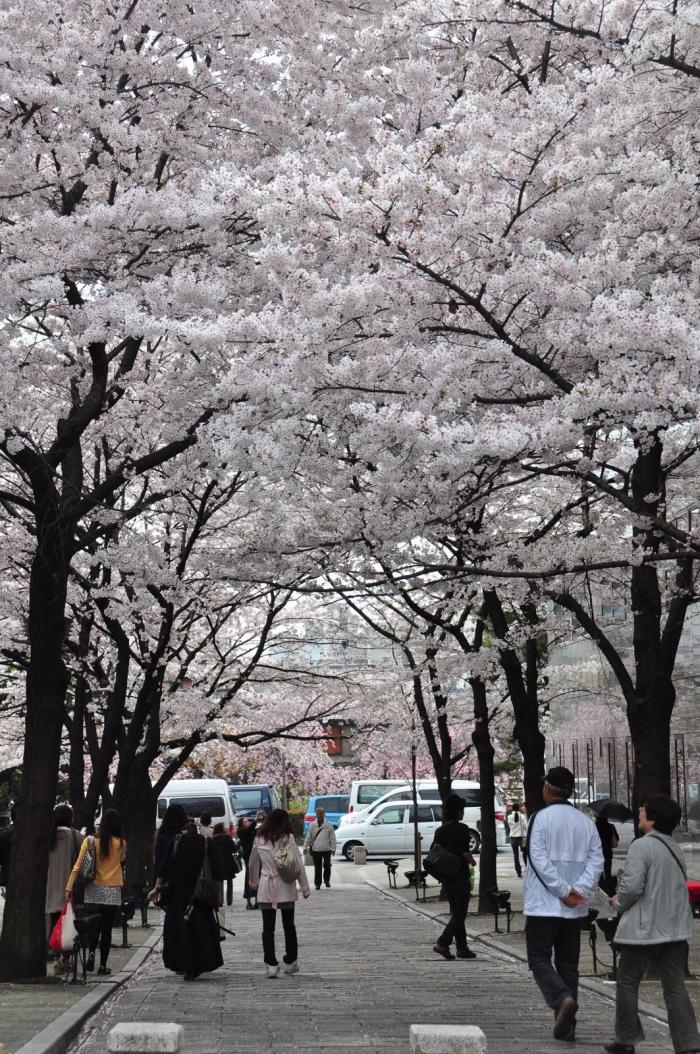 花见期间,虽然热门公园的野餐位子有限,不容易取得,但走着赏花,也是很好的体验。