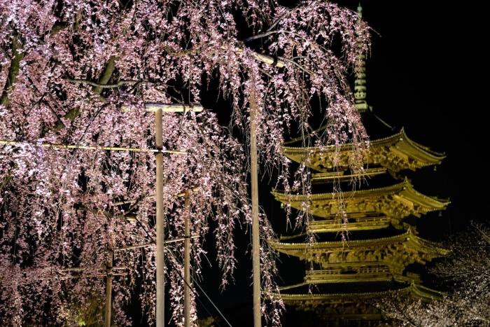 若说赏樱像是进入仙境,那么,夜间赏樱简直就是仿如偷偷进入神话故事般,让人着迷......