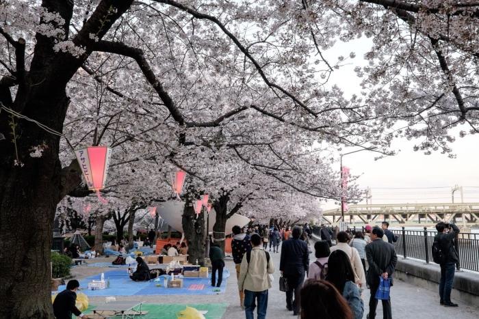 春天赏樱是日本人相当重视的活动,也是日本传统习俗之一。现今,日本人大多都在樱花树下欢乐聚餐,主要的赏花食物包括:花见团子、日本茶、以及各种和菓子。