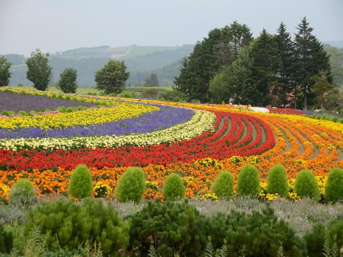 不同颜色的草花编织出大地彩色地毯。