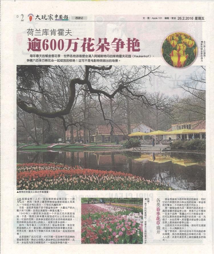 Holland Tulip (2)