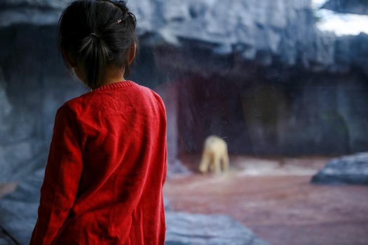 北极熊啊北极熊,你过得还好吗?