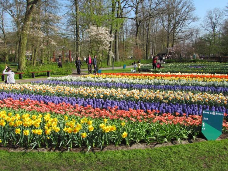 荷兰库肯霍夫的郁金香花园,每年为荷兰吸纳大量的游客前来赏花。