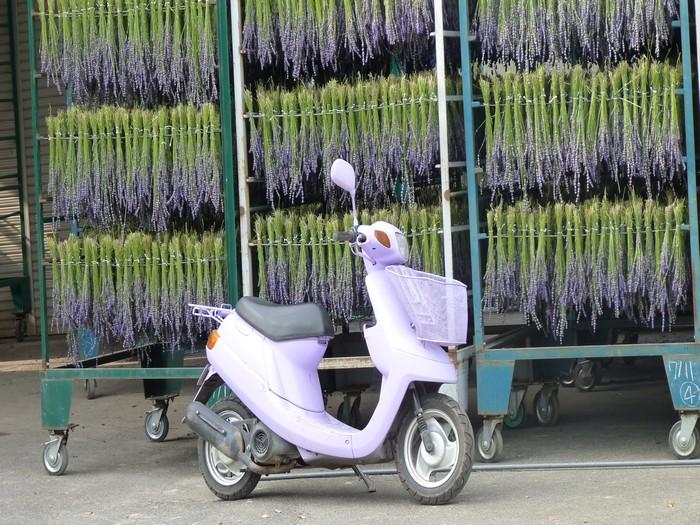 薰衣草晾干后,还可以做成各种加工制品。