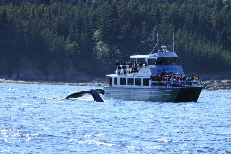 whale in Juneau