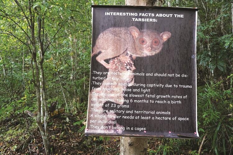 菲律宾眼镜猴保育中心。