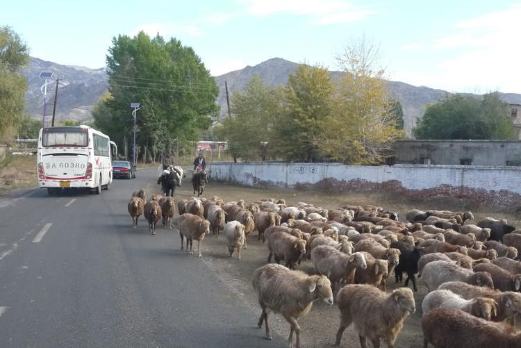 一路上的动物,也成了一道北疆风光。