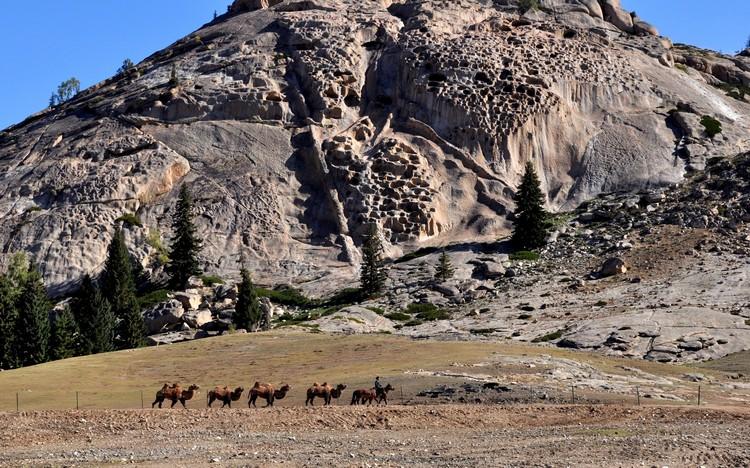 飞来峰下的骆驼列队行走,别有一番观景滋味。