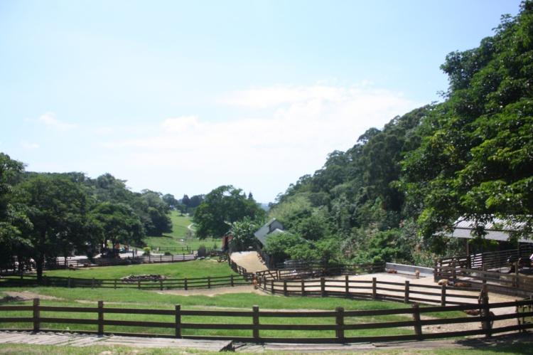 飞牛牧场如今拥有超过300只的乳牛,提供水准一流的牛奶。
