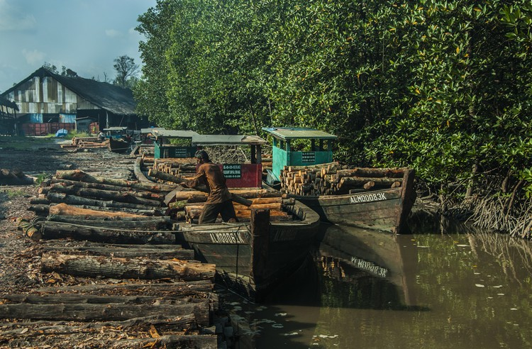 每个制炭厂都必须等到涨潮时,才能把红树林砍伐的树桐运回来。