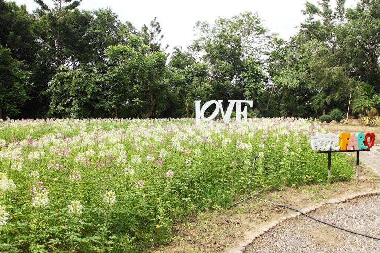 浪漫的南元农场花朵四季争艳
