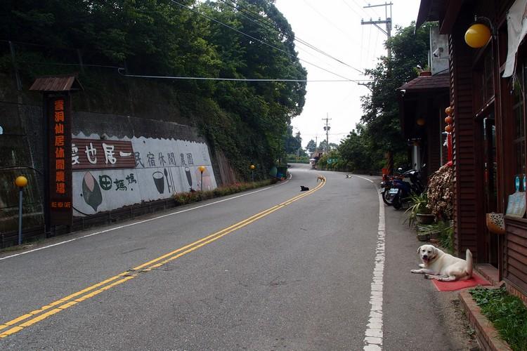 虽说在路旁,车辆经过的频率却不多,反而难得一片悠静。你看,连狗狗都慵懒的睡在路中央了。