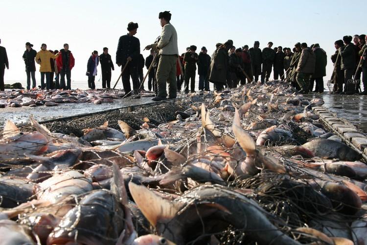 查干湖孕育着鳙鱼、鲢鱼、草鱼等等多种淡水鱼类。