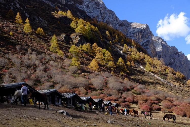 在洛绒牛场,马帮只有30匹马可载游客前往海拔更高的牛奶海与五色海。