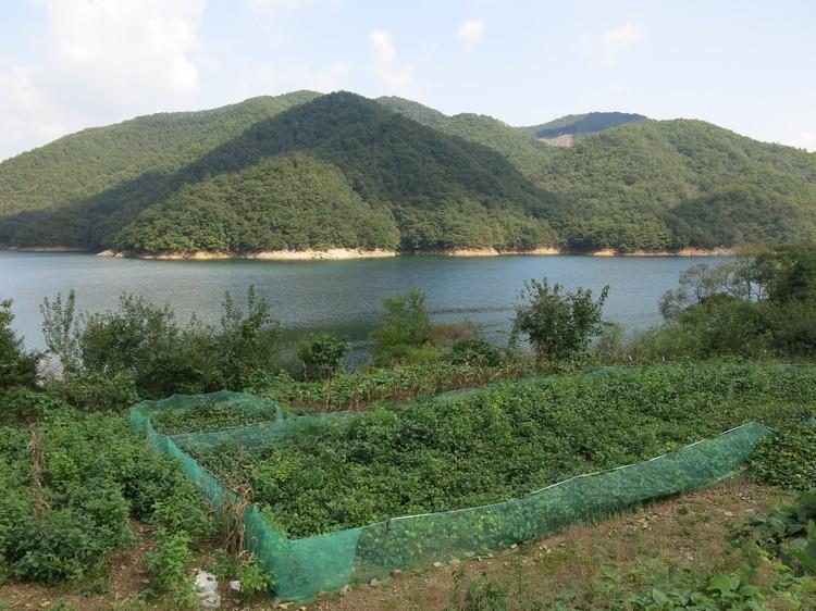 围起来的部分是一些蔬菜类,以及韩方草药。