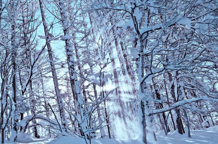 北海道地广人稀,让大片土地仍保留其最自然的面貌。
