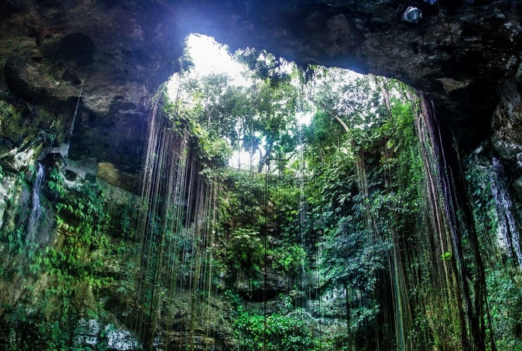 攀藤植物垂直吊挂在洞口边,为这里更添神秘感。