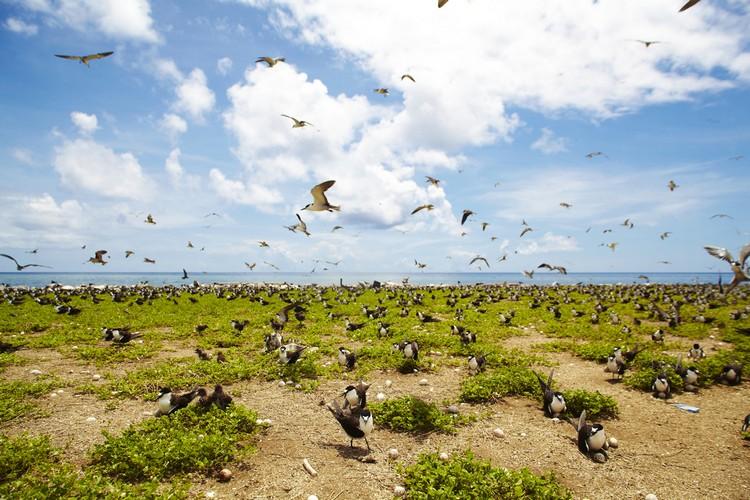 拉央拉央附近的小岛,比起海底的景色,密密麻麻的小鸟也颇有一番风味。