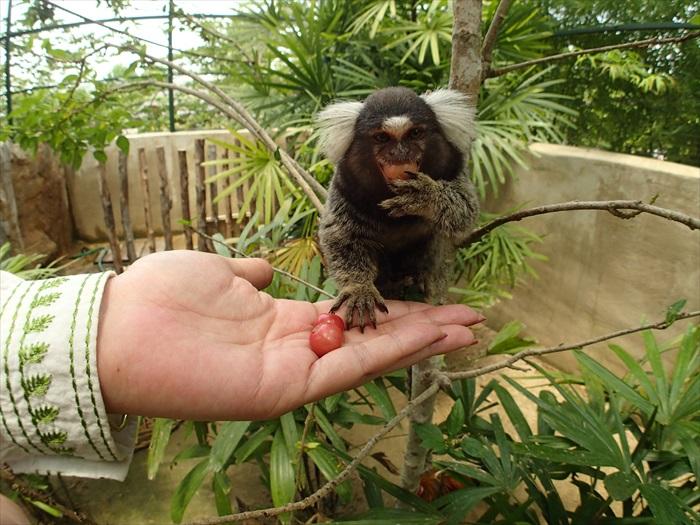 小绒猴:好好吃的水果