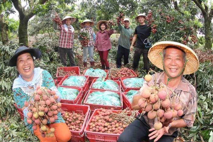 6、7月来我们农场采荔枝;仙湖休闲农场主人吴森富夫妇开心的呼唤!