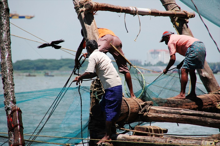 渔民齐心合力把渔网捞起。