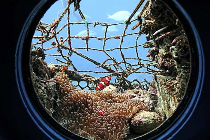 Through one of the peepholes in the Busena Marine Park observatory, one can see clownfish swimming among sea anemones.