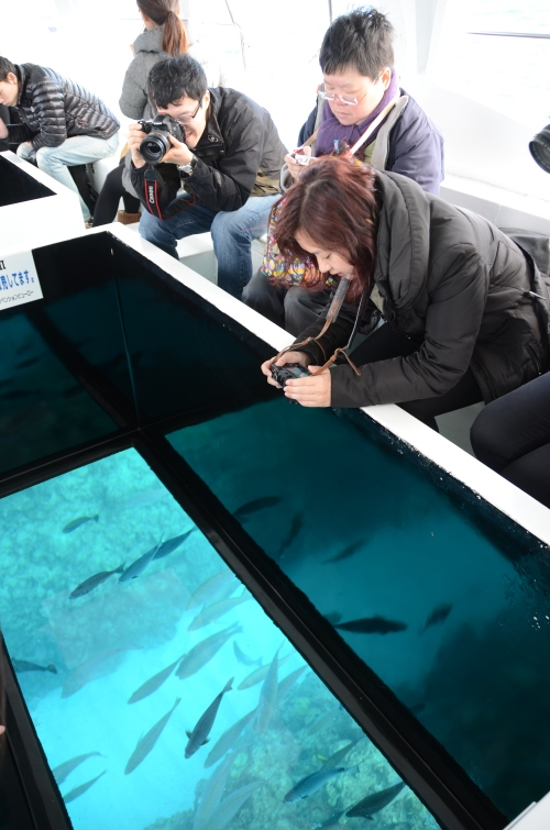 船底成群鱼儿串游,还可以看见美丽的珊瑚礁。