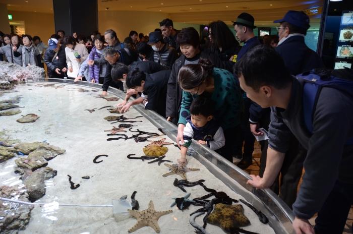 特设触摸池,让游客近距离观赏海星与海参。