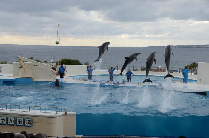 水族馆外还有海豚剧场,以蔚蓝大海为背景,为游客呈献精彩的海豚秀。