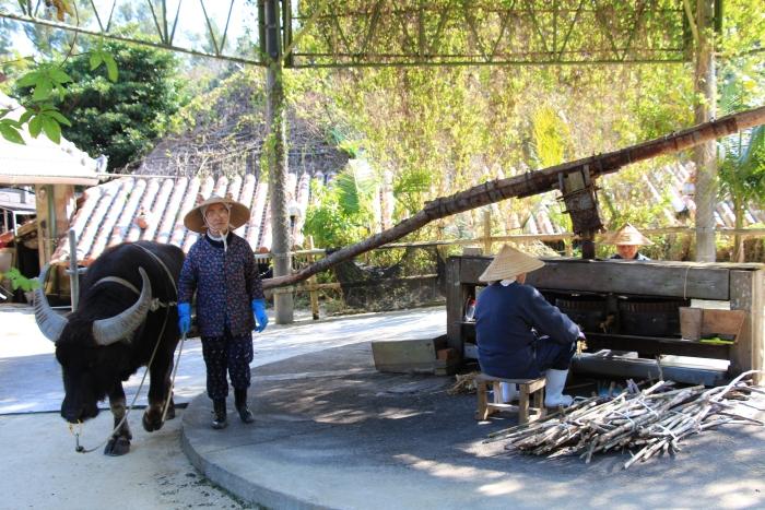 黑砂糖是琉球名产之一,靠水牛拉动砂糖车榨取甘蔗汁,然后透过煮甘蔗汁炼成黑砂糖是早期琉球人制作黑砂糖的方式。
