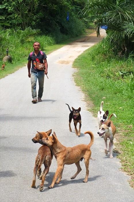 原住民青年携狗儿外出打猎。