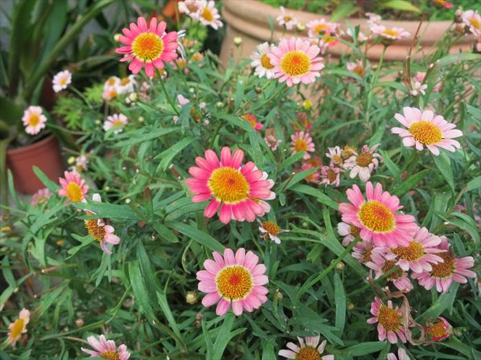 花卉热情盛开。
