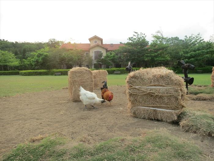 农场的土地是任何动物共享的。