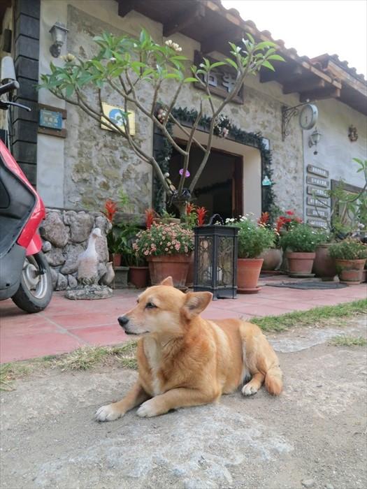 狗狗跑到大门前看着主人,宣告着悠闲日子已过,第一场寻宝比赛即将开始......