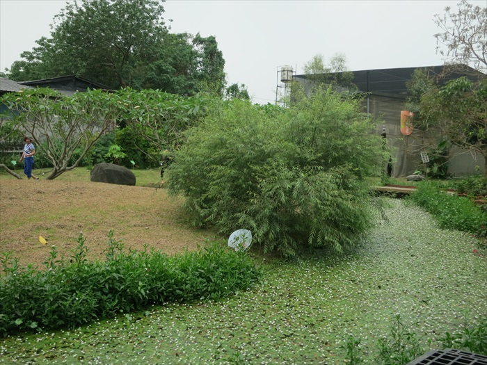 馆主栽种多种蝴蝶喜欢的植物,吸引更多蝴蝶到园区来。在引来的蝴蝶之中,以紫斑蝶和国宝级黄裳凤蝶最负盛名。