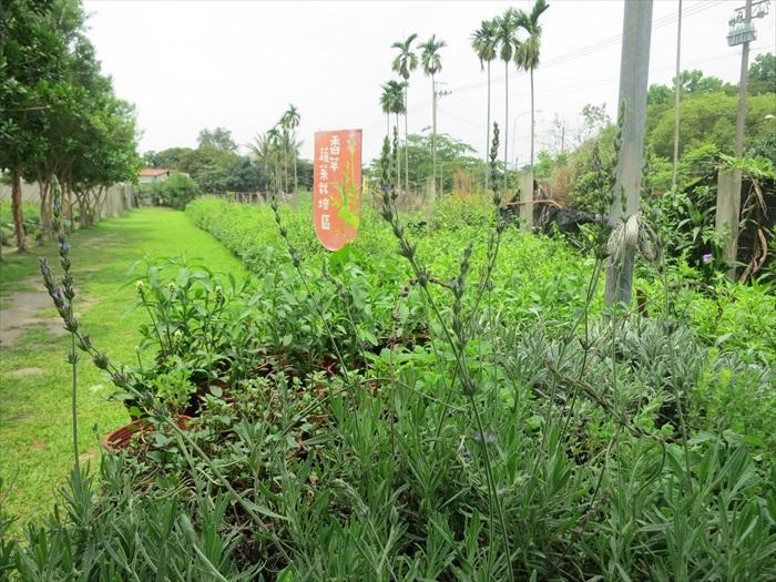 这里的香草种类不胜枚举,透过香味认识植物,也是一种乐趣。